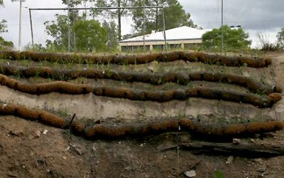 The great wall of coir logs
