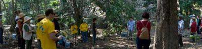 An understorey planting